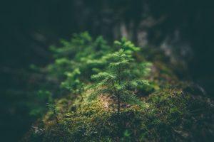 Environmental Policy & Environmental Procedure